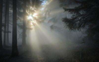 L'ombre dans le parcours de Flammes Jumelles